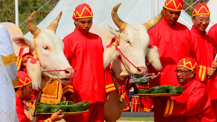 Royal Ploughing Ceremony in May in Phnom Penh, Cambodia