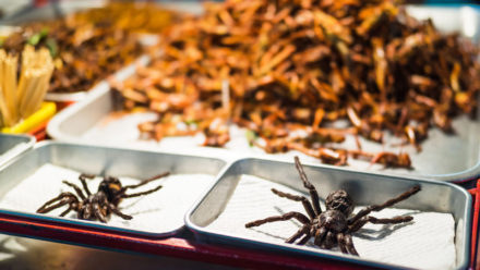 Insect Foods in Cambodia